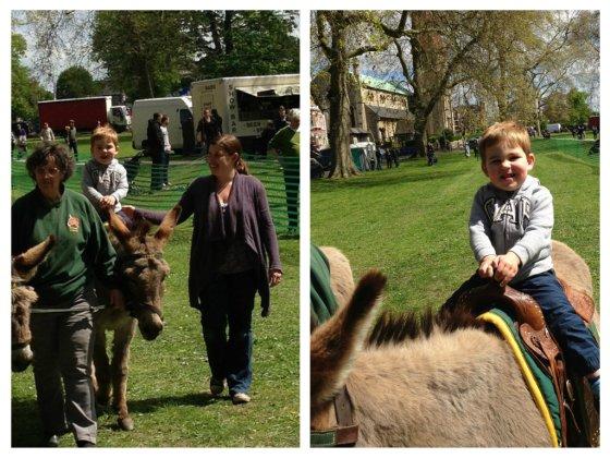 donkey3