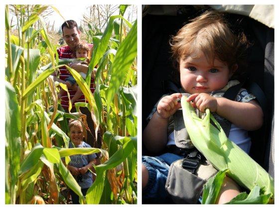 Corn fun