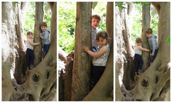 Siblings_tree