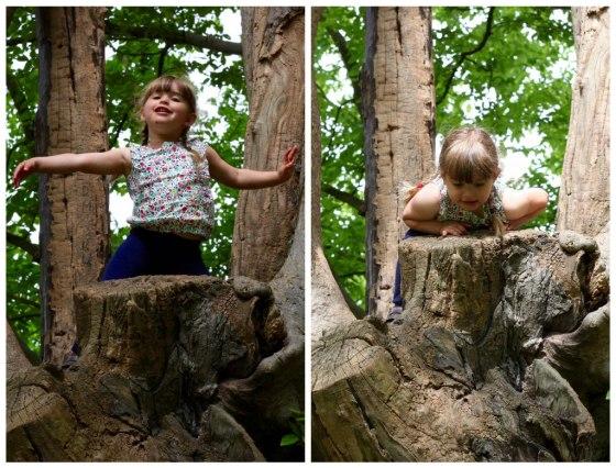 Soph_tree