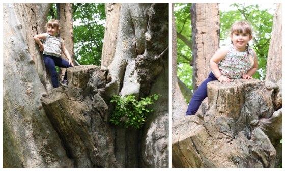 Soph_tree_1