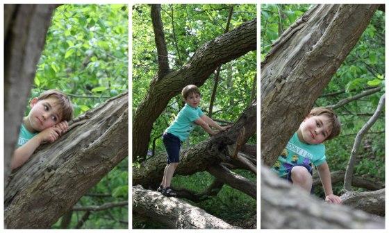 Alex-tree