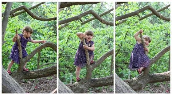 Sophie-tree-2