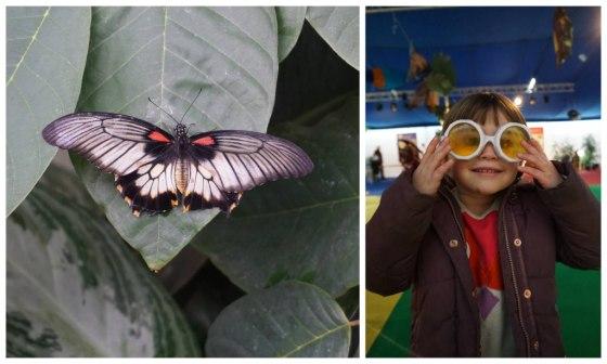 sophiebutterfly